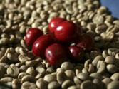 Cà phê Robusta nhân xanh