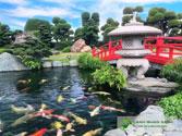 Thiết kế thi công hồ cá Koi