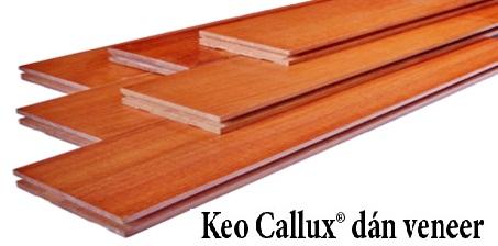 Keo Callux dán veneer