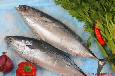 Hương cá ngừ