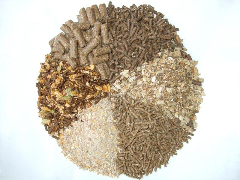 Hương liệu thức ăn chăn nuôi