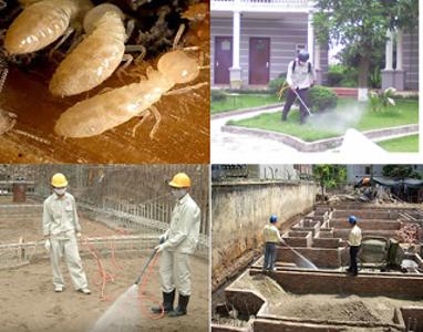 Dịch vụ diệt mối, diệt côn trùng