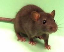 Phòng trừ chuột