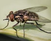 Phòng trừ ruồi