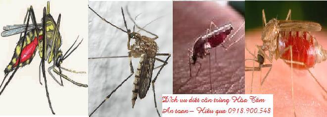 Dịch vụ diệt muỗi