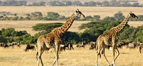 Kenya - Nam Phi