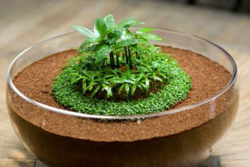 Đất sạch Eco cho thảm cỏ, tiểu cảnh