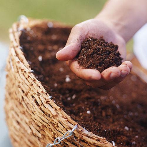 Đất sạch từ mùn dừa