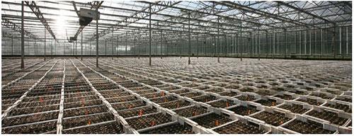 Đất sạch Eco cho vườn ươm