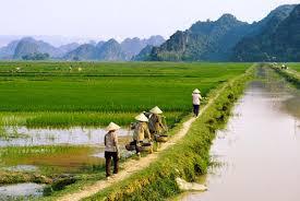 Tư vấn chuyển đổi đất nông nghiệp