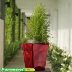 Chậu trồng cây tự dưỡng