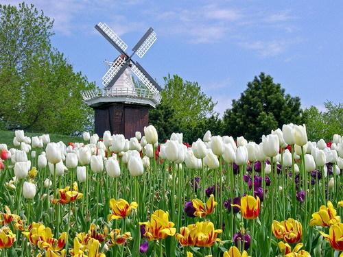 Chuyển phát nhanh quốc tế đi Hà Lan