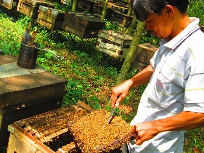 Trang trại nuôi ong