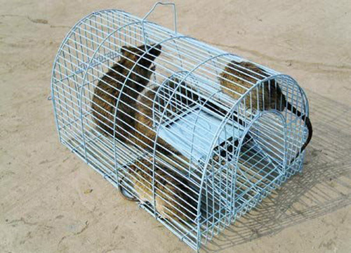 Dịch vụ diệt chuột