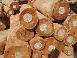 Phôi gỗ