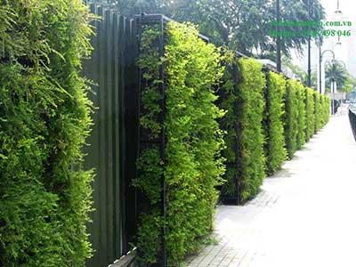 Vườn thẳng đứng