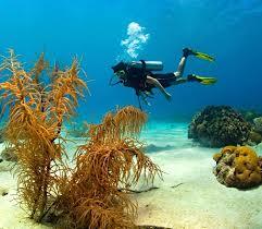 Lặn khám phá đại dương