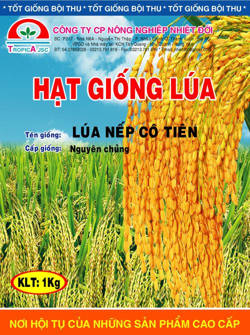Lúa nếp Cô Tiên