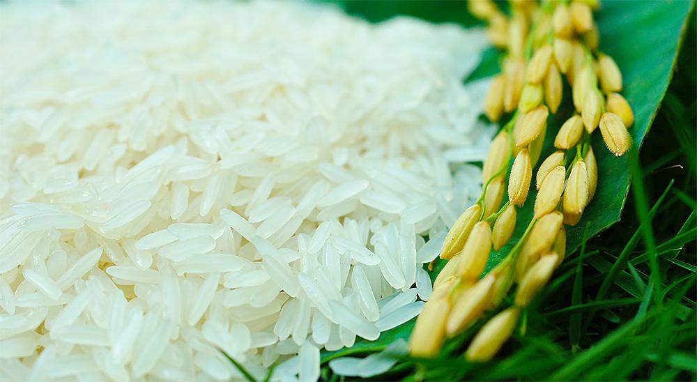 Gạo Hoa Lúa