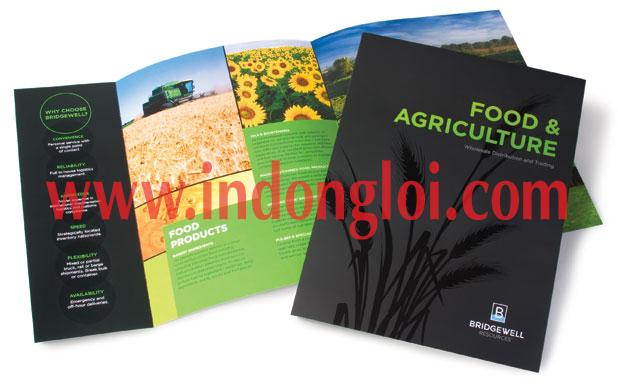 In ấn brochure