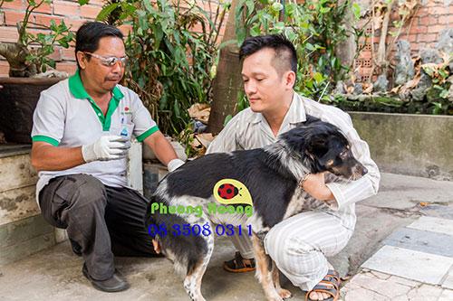 Dịch vụ diệt ve chó tại nhà