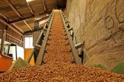 Viên gỗ nén