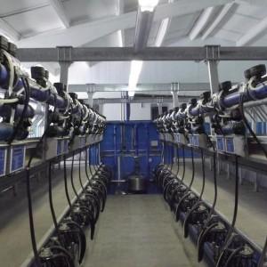 Hệ thống máy vắt sữa bò tập trung