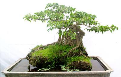 cây xanh nghệ thuật