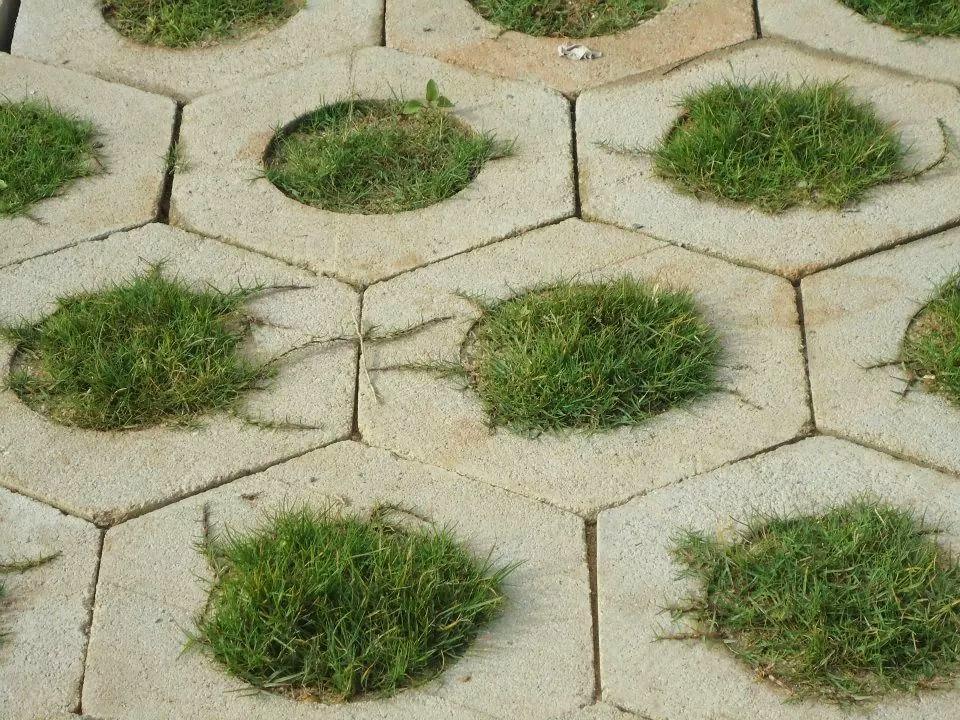 Gạch lục giác trồng cỏ