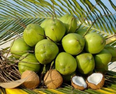 Dừa già
