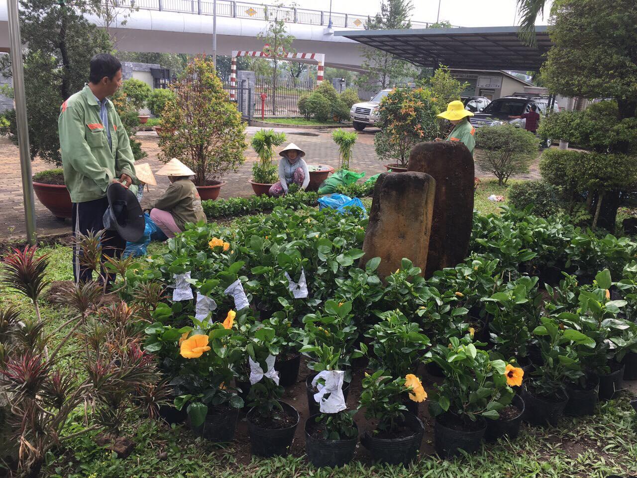Dịch vụ trồng cây xanh