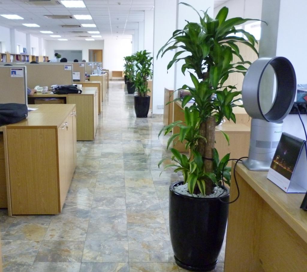 Cây văn phòng