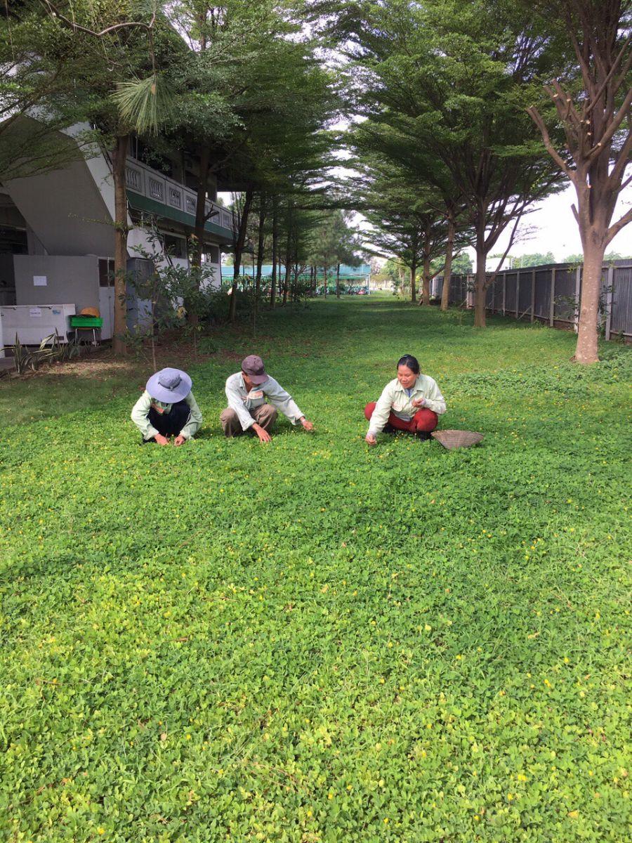 Dịch vụ trồng cỏ