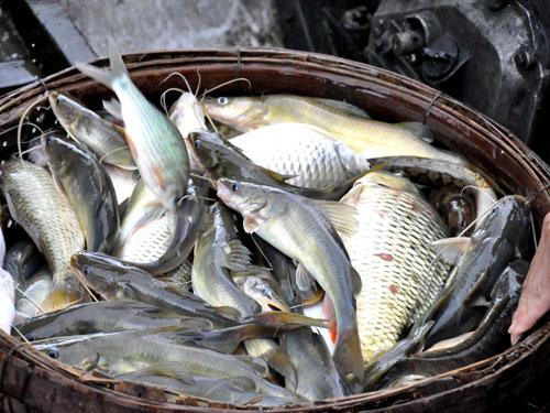 Cá tươi sống