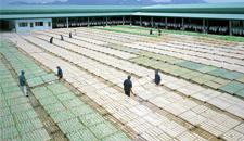 Nhà máy chế biến hải sản khô số 2 tại Phan Thiết