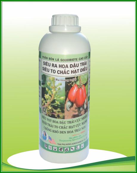 Siêu ra hoa đậu trái siêu to chắc hạt điều
