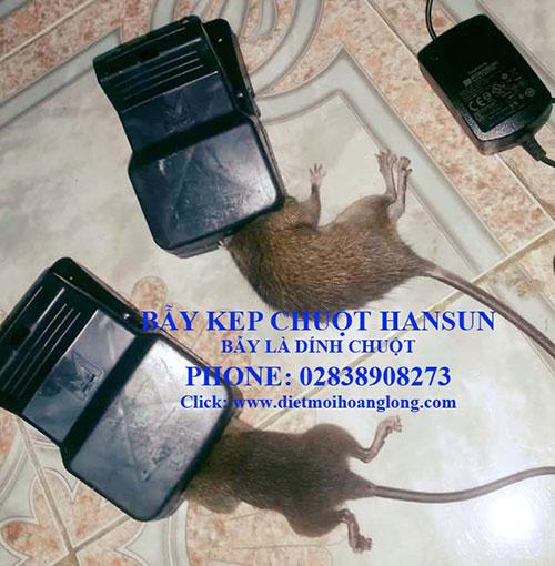 Bẫy kẹp chuột