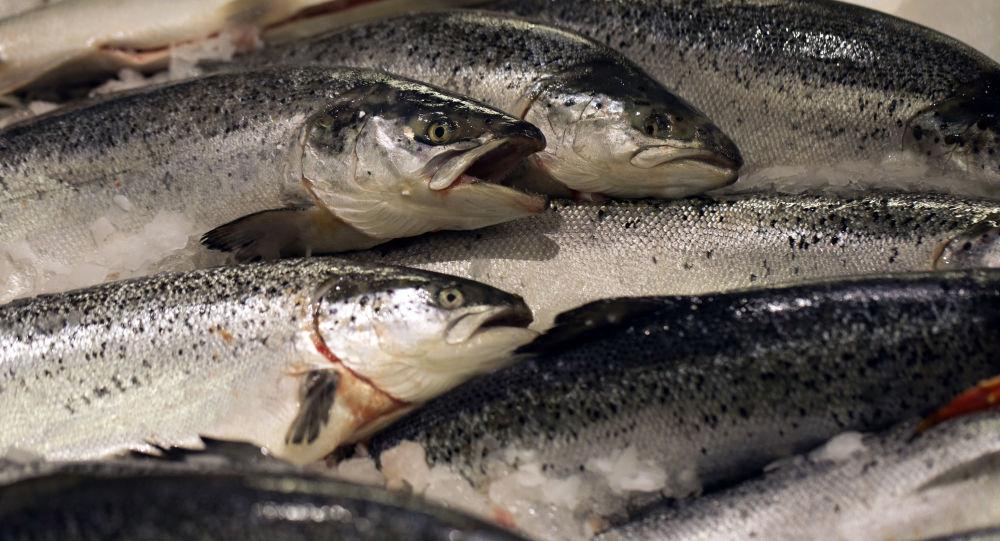 Nhập khẩu hải sản
