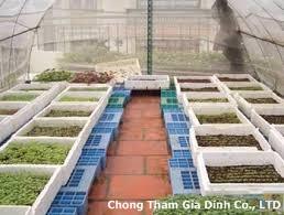Chống thấm vườn treo sân thượng