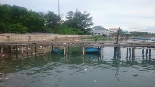 Hồ xả thải vào nguồn nước