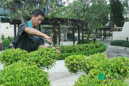 DV chăm sóc cây cảnh khách sạn