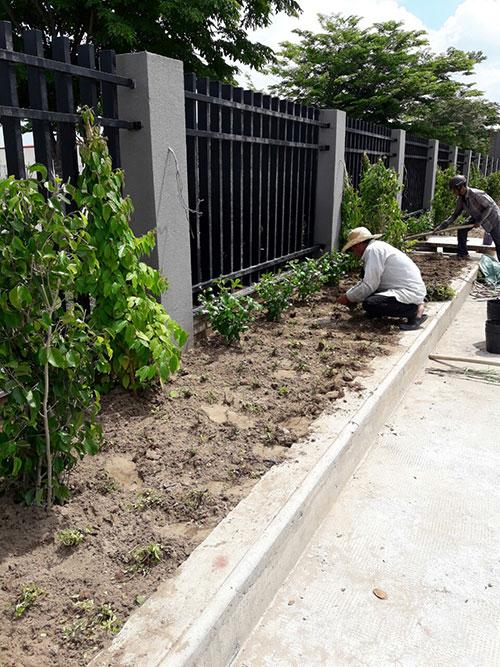 Dịch vụ chăm sóc, bảo dưỡng cây xanh