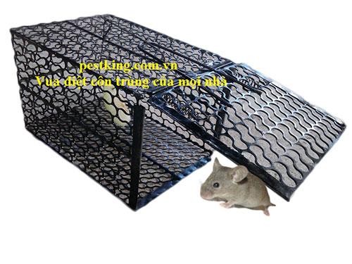 Dịch vụ diệt chuột bằng bẫy