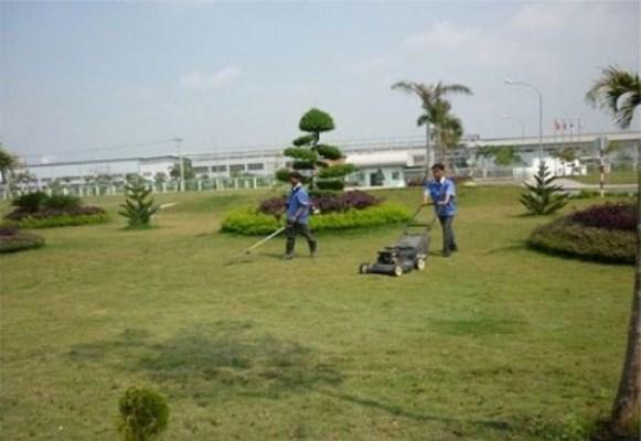 Dịch vụ chăm sóc cỏ và cây cảnh
