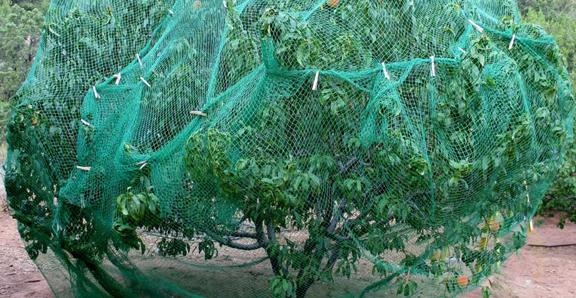 Lưới nông nghiệp
