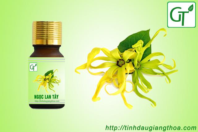 Tinh dầu hoa ngọc lan tây