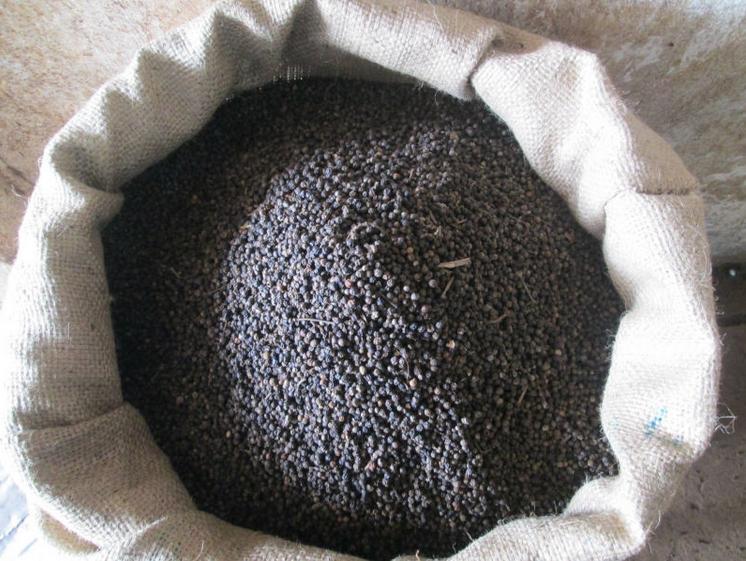 Tiêu đen loại 500 G/L