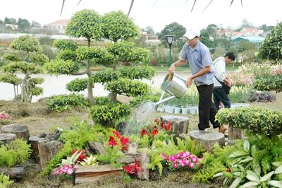 Dịch vụ cho thuê, chăm sóc, bảo dưỡng cây xanh