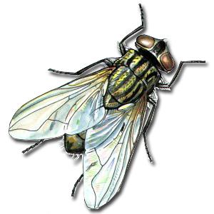Dịch vụ ruồi