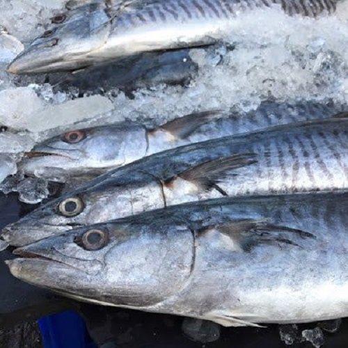 Cá Nục Đông Lạnh